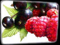 Pixley Berries - Rasberry and Blackcurrant